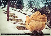 Hühner in meinem Garten (Tischkalender 2019 DIN A5 quer) - Produktdetailbild 12