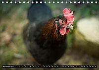 Hühner in meinem Garten (Tischkalender 2019 DIN A5 quer) - Produktdetailbild 11