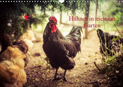 Hühner in meinem Garten (Wandkalender 2019 DIN A3 quer), Manuela Meyer