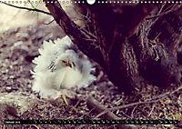 Hühner in meinem Garten (Wandkalender 2019 DIN A3 quer) - Produktdetailbild 1