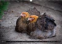 Hühner in meinem Garten (Wandkalender 2019 DIN A3 quer) - Produktdetailbild 4