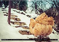 Hühner in meinem Garten (Wandkalender 2019 DIN A3 quer) - Produktdetailbild 12