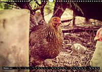 Hühner in meinem Garten (Wandkalender 2019 DIN A3 quer) - Produktdetailbild 10