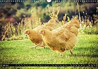 Hühner in meinem Garten (Wandkalender 2019 DIN A3 quer) - Produktdetailbild 7