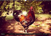 Hühner in meinem Garten (Wandkalender 2019 DIN A3 quer) - Produktdetailbild 5