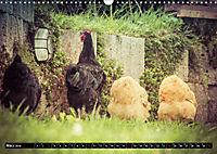 Hühner in meinem Garten (Wandkalender 2019 DIN A3 quer) - Produktdetailbild 3