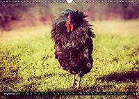 Hühner in meinem Garten (Wandkalender 2019 DIN A3 quer) - Produktdetailbild 9