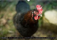 Hühner in meinem Garten (Wandkalender 2019 DIN A3 quer) - Produktdetailbild 11