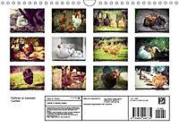 Hühner in meinem Garten (Wandkalender 2019 DIN A4 quer) - Produktdetailbild 2