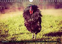 Hühner in meinem Garten (Wandkalender 2019 DIN A4 quer) - Produktdetailbild 9