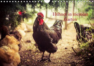 Hühner in meinem Garten (Wandkalender 2019 DIN A4 quer), Manuela Meyer