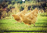 Hühner in meinem Garten (Wandkalender 2019 DIN A4 quer) - Produktdetailbild 7