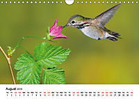 Hummingbirds Jewels of the skies (Wall Calendar 2019 DIN A4 Landscape) - Produktdetailbild 8