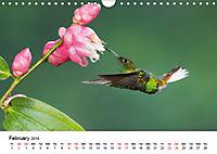 Hummingbirds Jewels of the skies (Wall Calendar 2019 DIN A4 Landscape) - Produktdetailbild 2