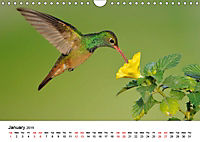 Hummingbirds Jewels of the skies (Wall Calendar 2019 DIN A4 Landscape) - Produktdetailbild 1