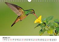 Hummingbirds Jewels of the skies (Wall Calendar 2019 DIN A4 Landscape) - Produktdetailbild 1