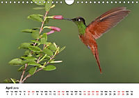 Hummingbirds Jewels of the skies (Wall Calendar 2019 DIN A4 Landscape) - Produktdetailbild 4