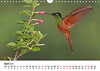Hummingbirds Jewels of the skies (Wall Calendar 2019 DIN A4 Landscape) - Produktdetailbild 4