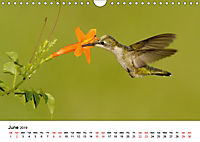Hummingbirds Jewels of the skies (Wall Calendar 2019 DIN A4 Landscape) - Produktdetailbild 6