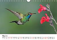 Hummingbirds Jewels of the skies (Wall Calendar 2019 DIN A4 Landscape) - Produktdetailbild 5