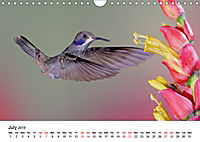 Hummingbirds Jewels of the skies (Wall Calendar 2019 DIN A4 Landscape) - Produktdetailbild 7
