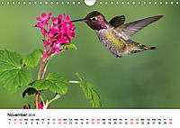 Hummingbirds Jewels of the skies (Wall Calendar 2019 DIN A4 Landscape) - Produktdetailbild 11