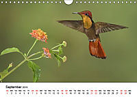 Hummingbirds Jewels of the skies (Wall Calendar 2019 DIN A4 Landscape) - Produktdetailbild 9