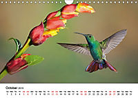 Hummingbirds Jewels of the skies (Wall Calendar 2019 DIN A4 Landscape) - Produktdetailbild 10