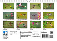 Hummingbirds Jewels of the skies (Wall Calendar 2019 DIN A4 Landscape) - Produktdetailbild 13
