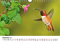 Hummingbirds Jewels of the skies (Wall Calendar 2019 DIN A4 Landscape) - Produktdetailbild 12