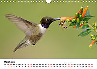 Hummingbirds Jewels of the skies (Wall Calendar 2019 DIN A4 Landscape) - Produktdetailbild 3