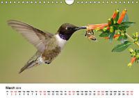 Hummingbirds Jewels of the skies (Wall Calendar 2019 DIN A4 Landscape) - Produktdetailbild 3
