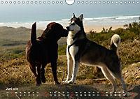 Hunde am Meer - Spielen, toben und rennen (Wandkalender 2019 DIN A4 quer) - Produktdetailbild 6