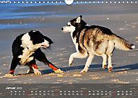 Hunde am Meer - Spielen, toben und rennen (Wandkalender 2019 DIN A4 quer) - Produktdetailbild 1