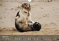 Hunde am Meer - Spielen, toben und rennen (Wandkalender 2019 DIN A4 quer) - Produktdetailbild 4