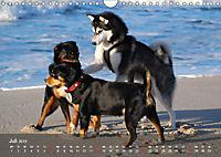 Hunde am Meer - Spielen, toben und rennen (Wandkalender 2019 DIN A4 quer) - Produktdetailbild 7