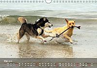 Hunde am Meer - Spielen, toben und rennen (Wandkalender 2019 DIN A4 quer) - Produktdetailbild 5