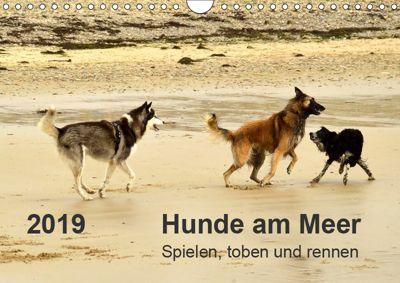 Hunde am Meer - Spielen, toben und rennen (Wandkalender 2019 DIN A4 quer), Dirk Walter