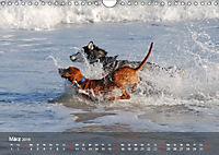 Hunde am Meer - Spielen, toben und rennen (Wandkalender 2019 DIN A4 quer) - Produktdetailbild 3