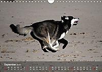 Hunde am Meer - Spielen, toben und rennen (Wandkalender 2019 DIN A4 quer) - Produktdetailbild 9