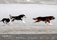 Hunde am Meer - Spielen, toben und rennen (Wandkalender 2019 DIN A4 quer) - Produktdetailbild 12