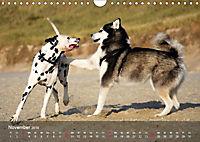 Hunde am Meer - Spielen, toben und rennen (Wandkalender 2019 DIN A4 quer) - Produktdetailbild 11