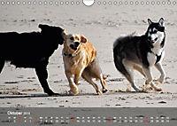 Hunde am Meer - Spielen, toben und rennen (Wandkalender 2019 DIN A4 quer) - Produktdetailbild 10