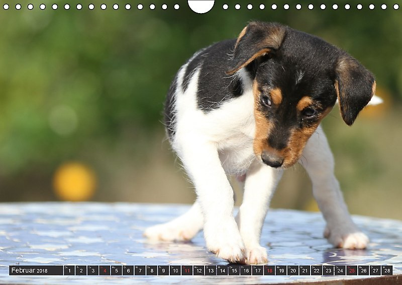 Hunde Andalusien