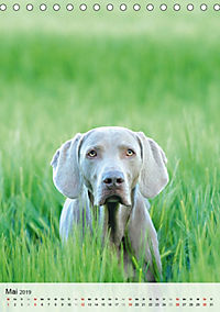 Hundepersönlichkeiten (Tischkalender 2019 DIN A5 hoch) - Produktdetailbild 5