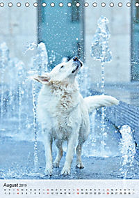 Hundepersönlichkeiten (Tischkalender 2019 DIN A5 hoch) - Produktdetailbild 8