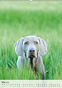 Hundepersönlichkeiten (Wandkalender 2019 DIN A2 hoch) - Produktdetailbild 5