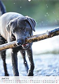 Hundepersönlichkeiten (Wandkalender 2019 DIN A2 hoch) - Produktdetailbild 6