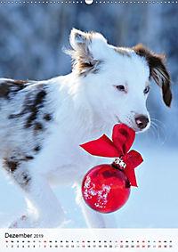 Hundepersönlichkeiten (Wandkalender 2019 DIN A2 hoch) - Produktdetailbild 12