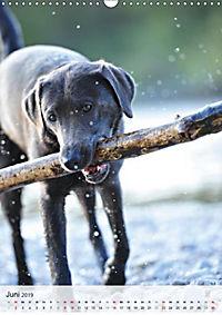Hundepersönlichkeiten (Wandkalender 2019 DIN A3 hoch) - Produktdetailbild 9
